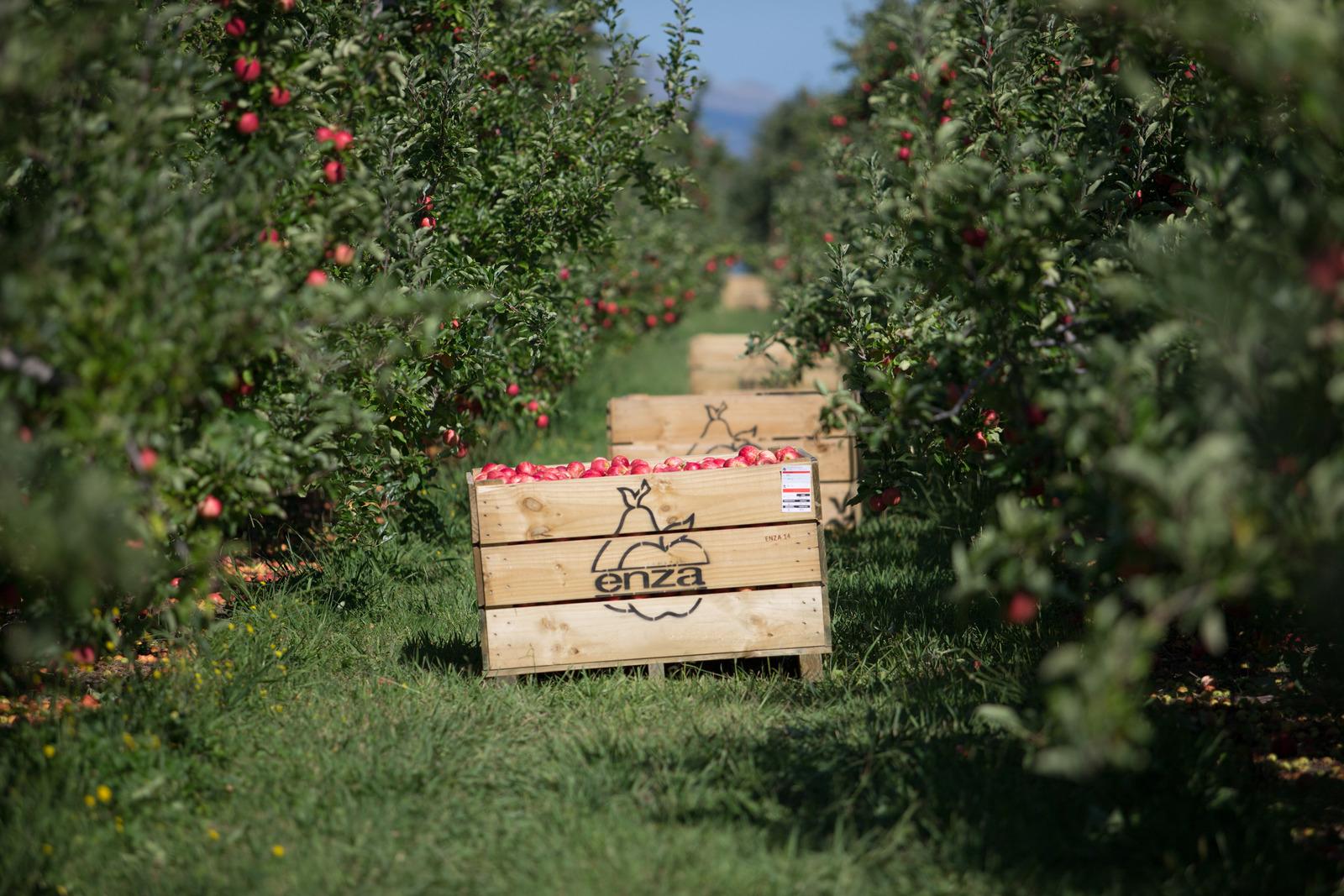 BayWa Bilanz 2012: Wachstumskurs trägt Früchte